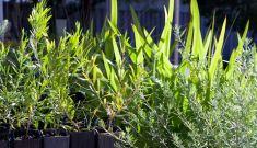 Native Plant Propagation