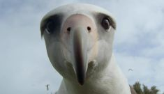 Albatross – Film Screening