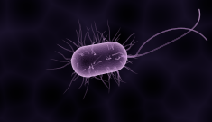 Microbes on the mind