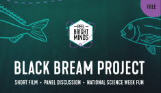 The Black Bream Project