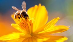 New honey bee research centre to create a buzz