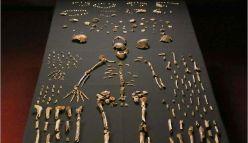 Dating Homo naledi: the Surprising Story