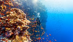 How Coral Reef Animals Sustain Their Marine Populations