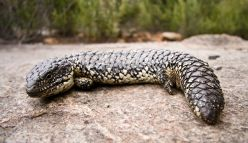 Wriggly Reptiles at Fringe World