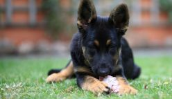 Raw meat diet could be ruff on your pets