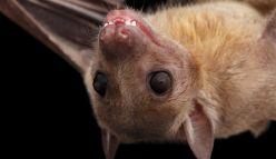 How bats help explain the human brain