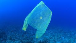 What will we do without plastic bags?