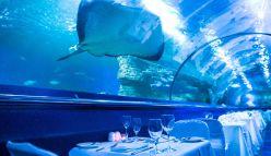 AQWA Dine Beneath the Sea