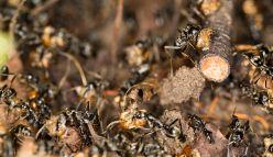 Wildlife death match: ants versus termites