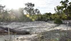 New rehabilitation plan to restore Roe 8