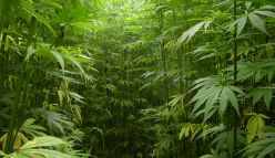 Is Hemp the key to a sustainable future?