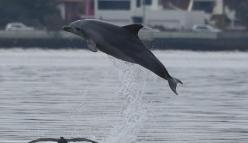 Dolphin Watch training