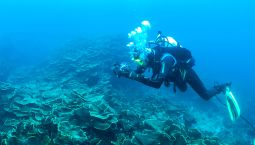WA corals in crisis