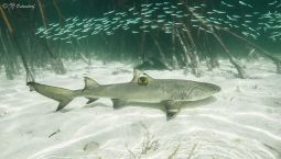 What do sharks do all day?