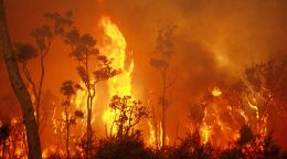 International wildfire research heats up in WA