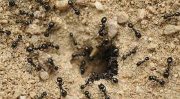 Ants have self-control, unlike some of us