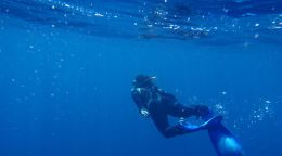 Mapping marine megafauna on the high seas