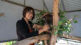 Climbing the koala's family tree