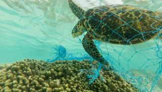 Sea turtles and the real impact of plastic pollution