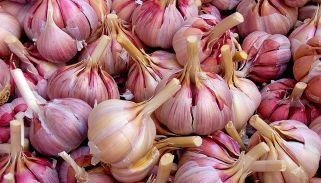 Benefits of garlic extend to Alzheimer's