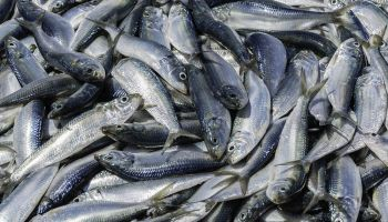 Teach mankind to fish … and we will waste 10 million tonnes each year