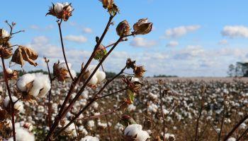 Genetically modified produce: misunderstood wonders