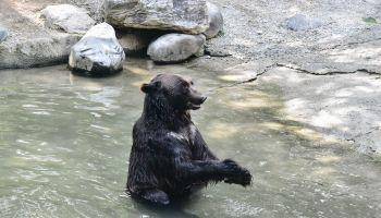 Quiz Night—Free the Bears Fund