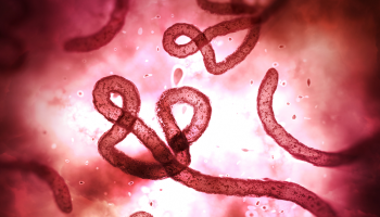 A shortcut to testing for Ebola
