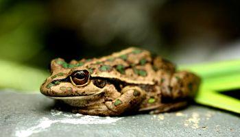 Frog Fest at Herdsman Lake Wildlife Centre