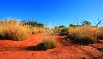 Spinifex promises stronger condoms