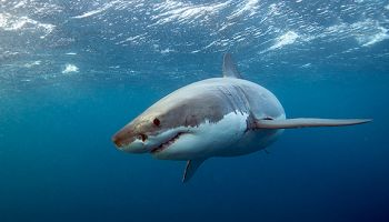 AQWA – Post Traumatic Shark Syndrome!