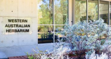 The Western Australian Herbarium is home to the biggest collection of introduced and native plants in WA, with over 750,000 plant specimens. .