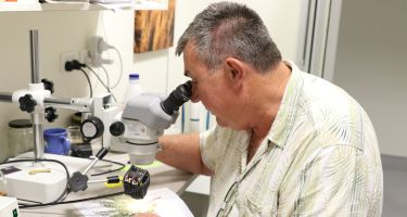 """Identification: """"We employ several identification botanists who can identify specimens. You can also come in to identify your specimens by matching them with specimens in our Public Reference Herbarium."""" ."""