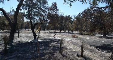 The fire burnt large areas of Whiteman Park. Credit: Stephanie Hing
