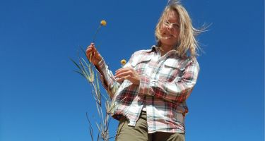 Ellen Hickman with a cottonheads species discovered in the Kalbarri Province. Credit: Stephen Hopper