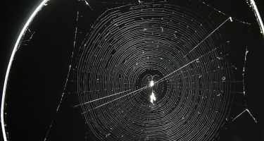 Normal orb web made by a healthy spider . Credit: Keizo Takasuka
