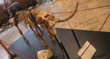 Dwarf elephant from the Middle Pleistocene of Sicily (Palaeoloxodon falconeri) . Credit: Roberto Rozzi