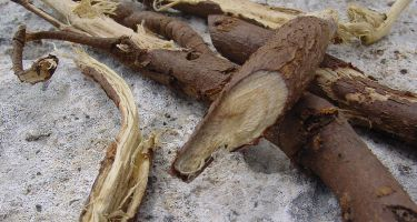 Liquorice comes from the root of a plant calledGlycyrrhiza . Credit: Jeansef