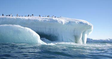 Experience an Adélie penguin colony close up… . Credit: White Spark Pictures
