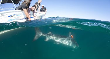 …helps to reveal shark activity below the surface . Credit: Alex Kydd