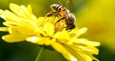 Honeybees have stolen the headlines . Credit: Terminix
