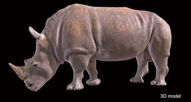 Accurate 3D model of Bakari . Credit: Digital Life Project