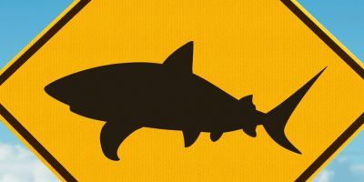 Five ways to reduce your chances of encountering a shark this summer