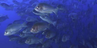 Taking Notes: Aquaculture