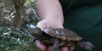Meet the Friends of the Western Swamp Tortoise