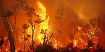 International wildfire research heats up in WA