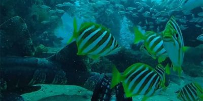 Fishers capture underwater world for science