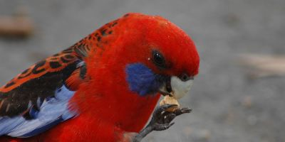 Feathers have their own scents, and predators know it
