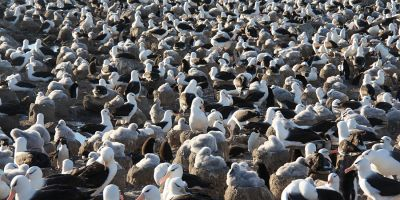 What can albatross poo tell us about climate change?