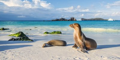 The secret life of island animals